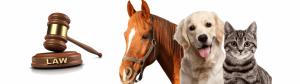 amenzi contraventionale animale avocat